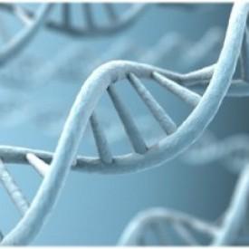 Ген ожирения или образ жизни