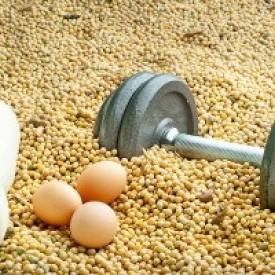 Протеин — король спортивных добавок!