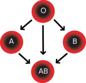 появление групп крови